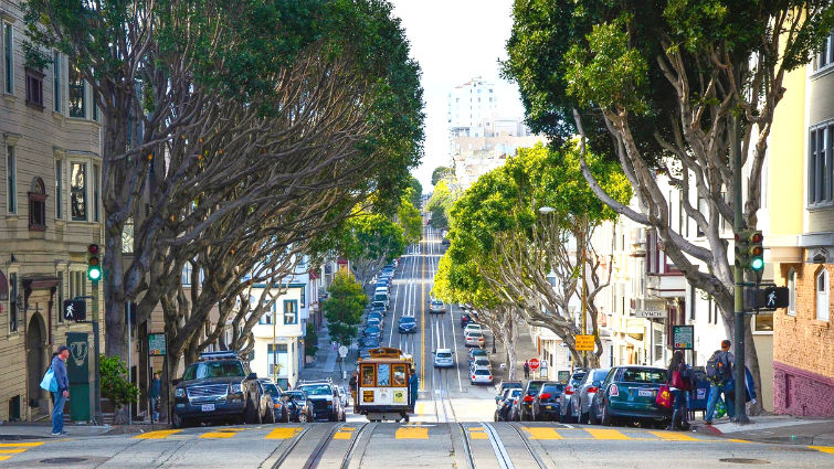 Los árboles en la ciudad